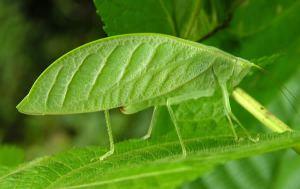 Leaf Texture Mimicry
