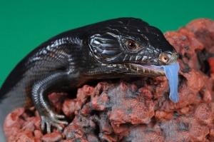negro lagarto